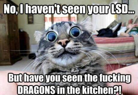cat_dragons_kitchen