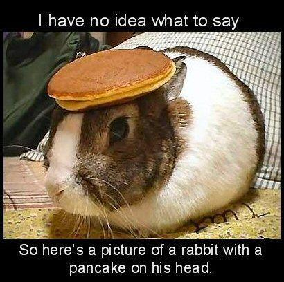 bunnypancake