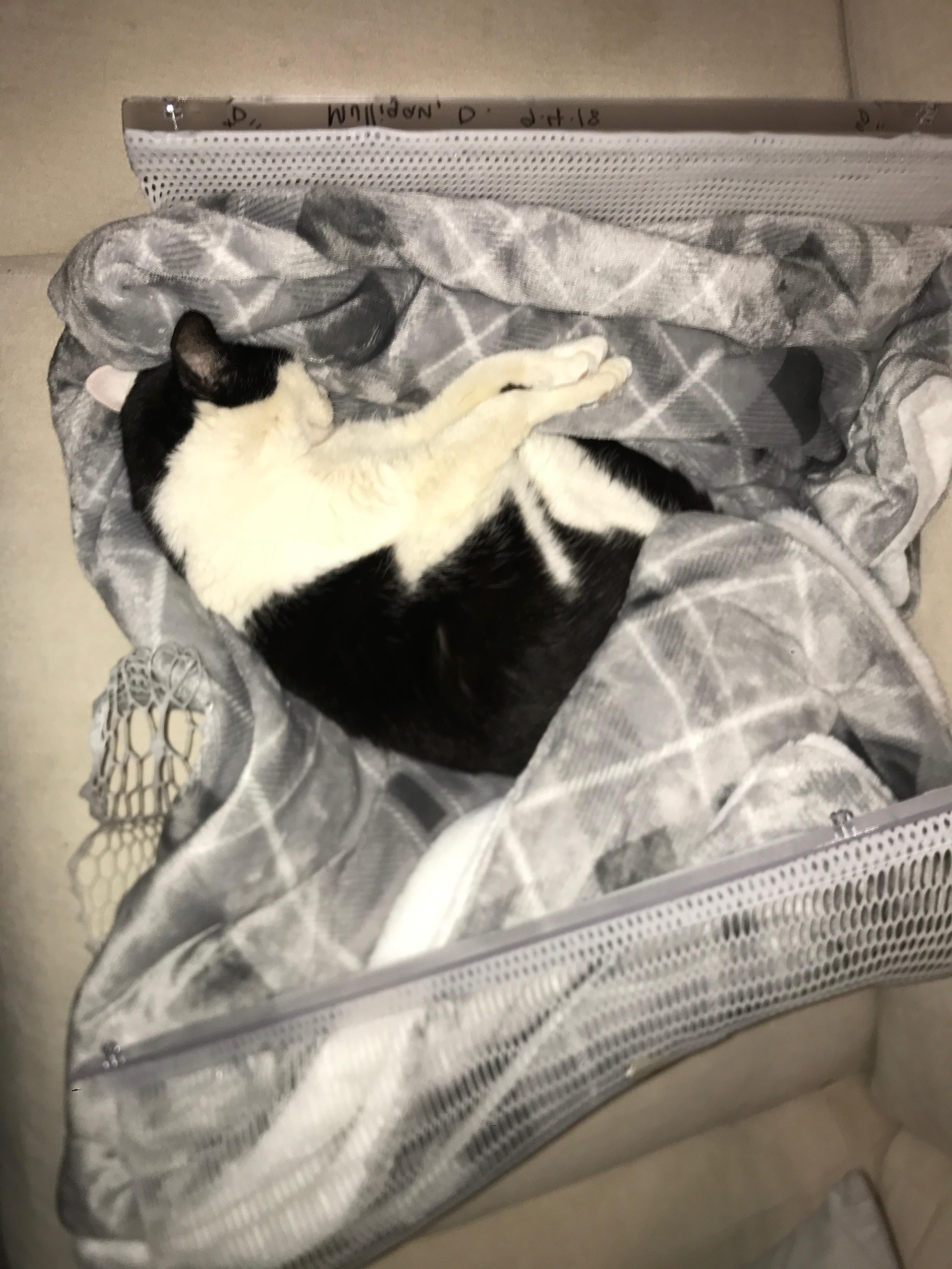 radiation pants cat bed 7
